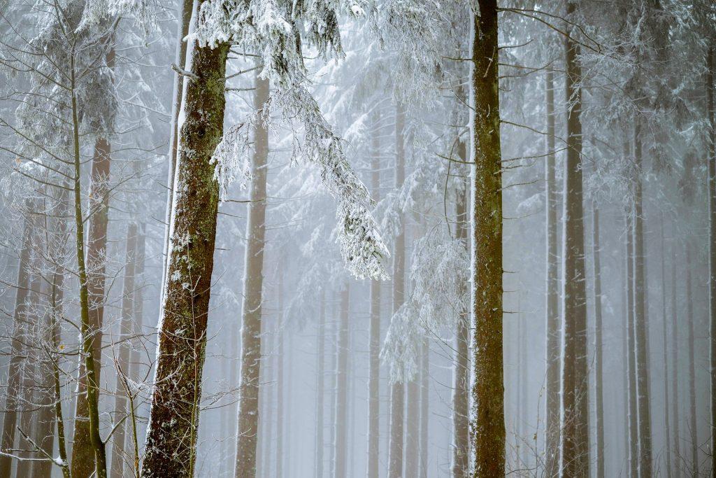 Stillevandring i vinterskoven
