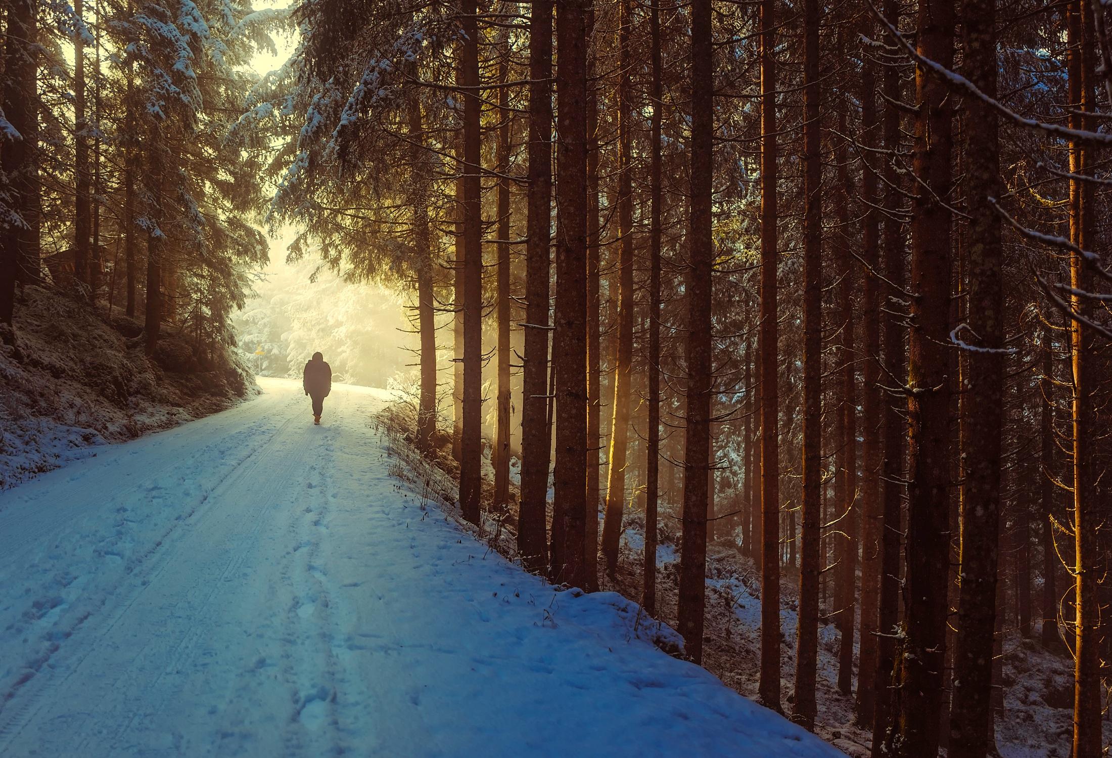 Stillevandring en vinterdag i skoven