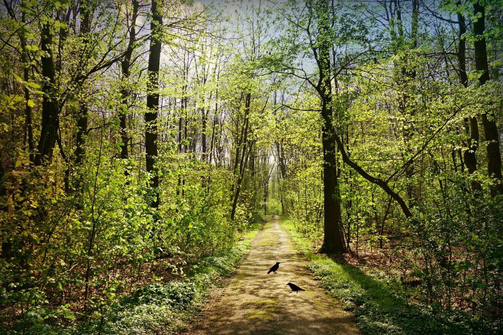 Du guides i Mindfulness i den lysegrønne bøgeskov