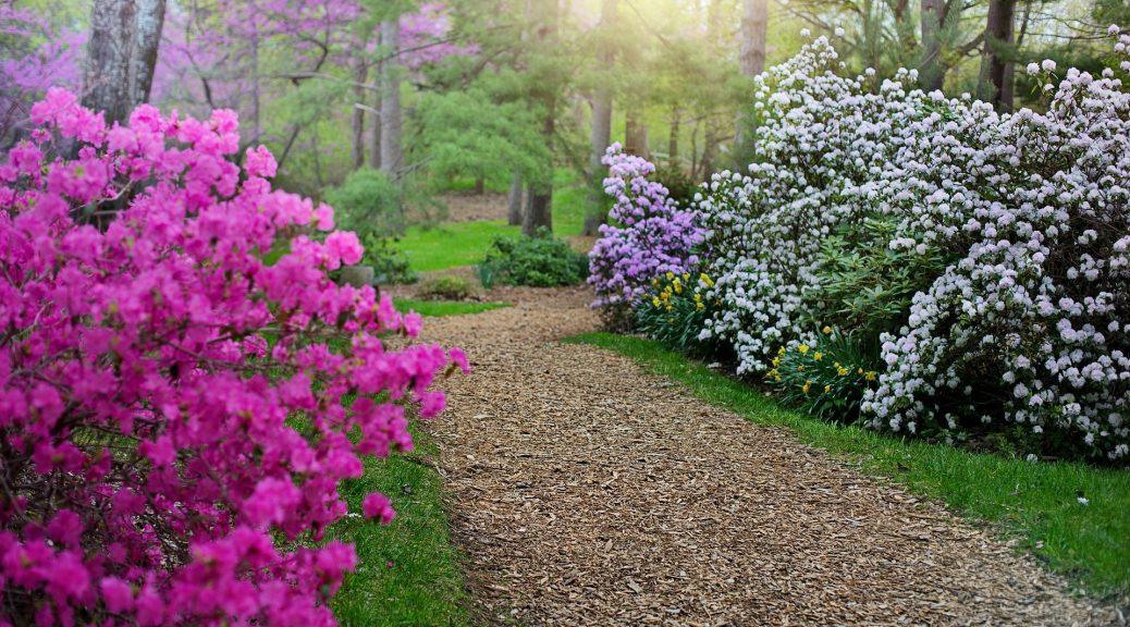 Mindfulness i rhododendronparken