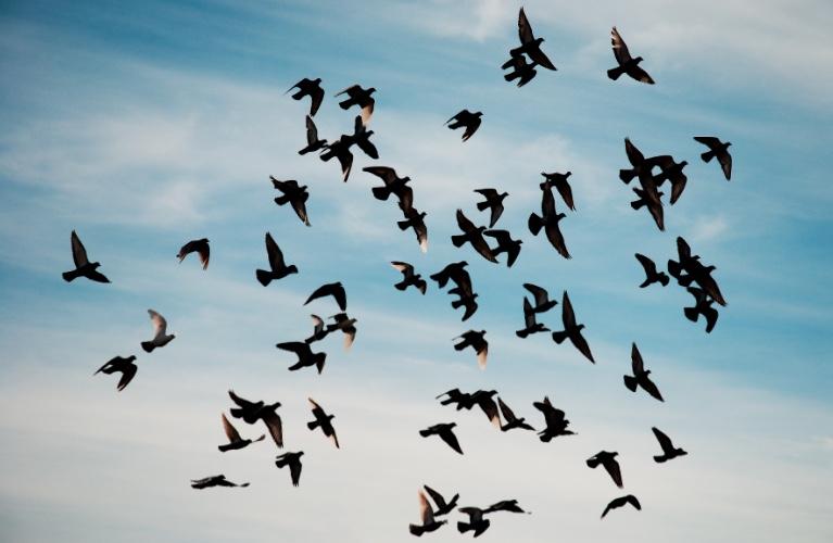 Tag en mikropause og kig på fugle