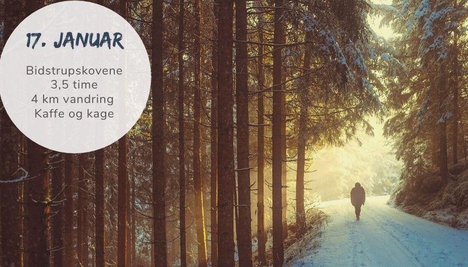 Stille vintervandring i Bidstrup-skovene